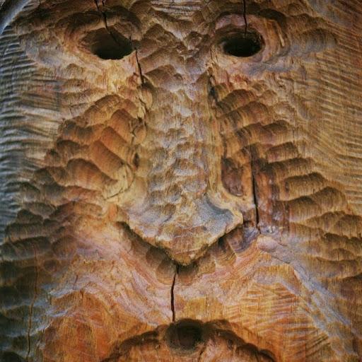 Arbosapiens - Taille et soins aux arbres, Elagage, Abattage  picture