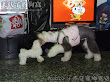 momo是少根筋,但玩的時候不會太粗魯,不會也不曾踩到小狗喔