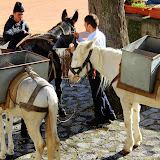 Mules Do The Heavy Lifting for Construction in the Cliffside Villages - Pontone, Italy