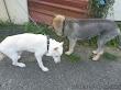 老犬組:Nova和小田由美代子牽。