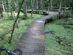 There was an awesome wooden path through the swamp just behind the venue