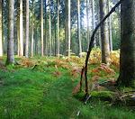 Die Farne zeigen als erstes den Herbst.