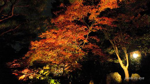 青蓮院門跡のライトアップ1