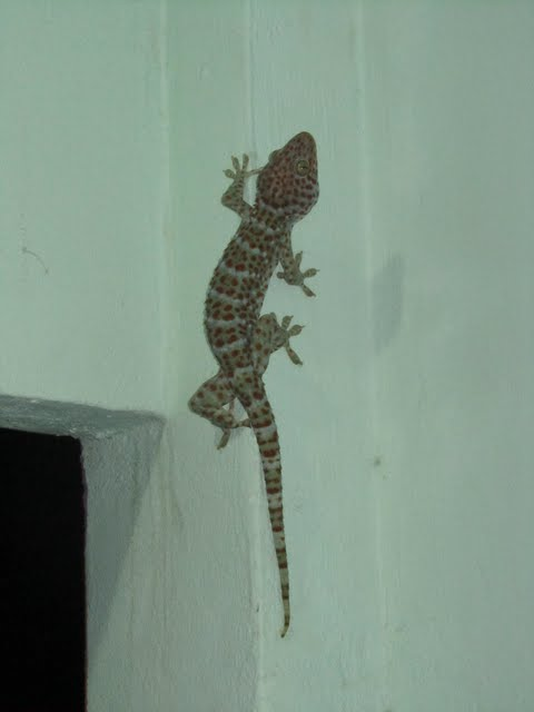 lizard in our balcony