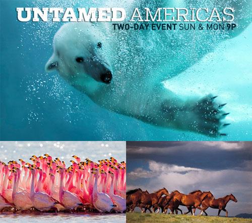 Dziewicza Ameryka / Untamed America (2012) PL.TVRip.XviD / Lektor PL