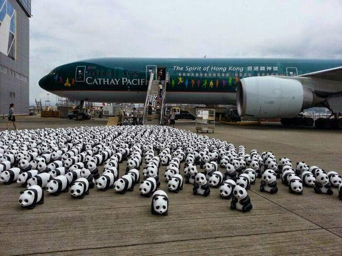 panda cathay