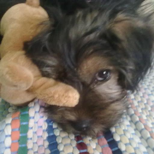 Come insegnare ai cuccioli dove fare i bisogni attilabrador - Sculacciate a letto ...