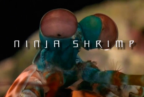 Wojownicze skorupiaki / Ninja Shrimp (2010) PL.720p.HDTV.x264 / Lektor PL
