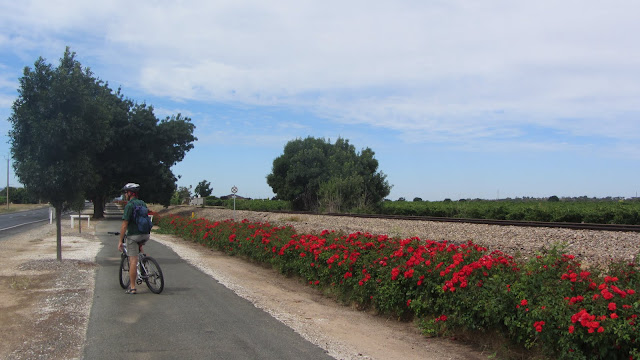 The excellent bicycle path between Nuriootpa and Tanunda.