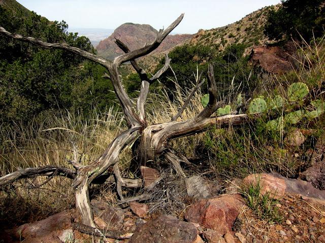 Wild Tree Trunk