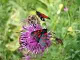 Grouillement de vie – fleurs, insectes, papillons variés et colorés... (SF)