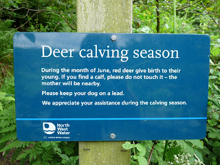 Although it was Deer calving season I did not see any.