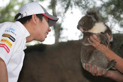 Камуи Кобаяши с коалой в мельбурнском зоопарке перед Гран-при Австралии 2012