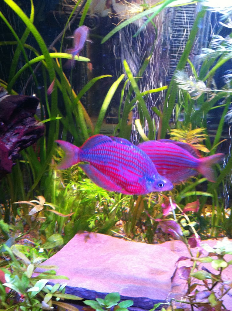 Cell phone pictures of my 75 gallon tank IMAGE_F29A6C11-6340-425C-ABCE-BBE55E922D7D