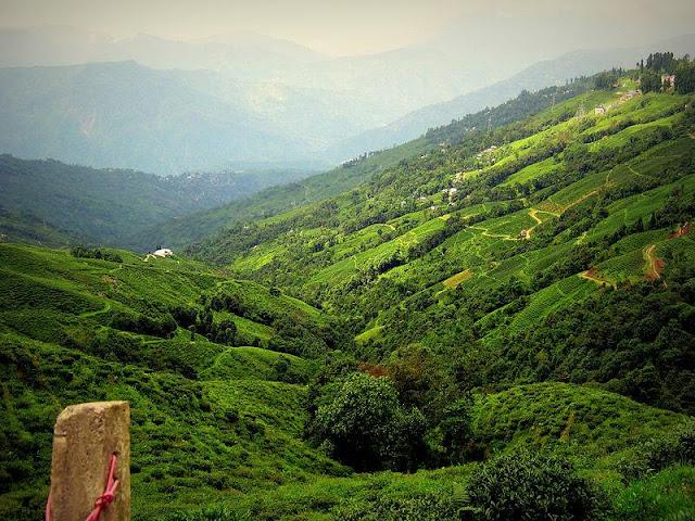 Darjeeling - India's Dream Land Seen On www.coolpicturegallery.us