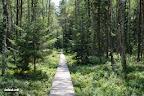 Pelkinis miškas