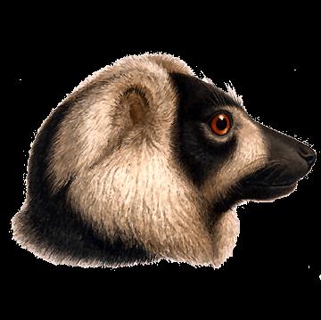 Dan Animal review