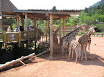 A look at the Giraffe pavilion