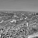 Castiglione Tinella i vigneti di Moscato - fotografia di Vittorio Ubertone
