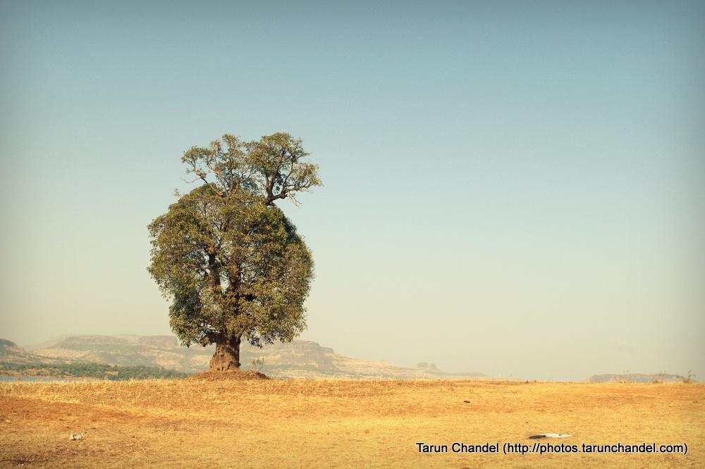 Old Tree, Tarun Chandel Photoblog