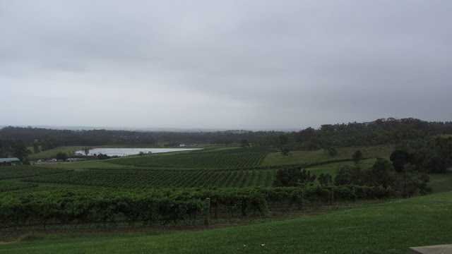 The cloud-covered view from the Audrey Wilkinson Vineyard.