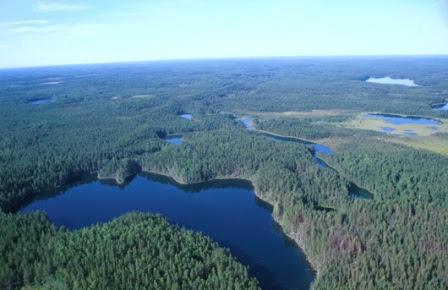 Hutan di Russia
