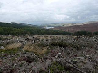 Dead wood near Goyts Clough