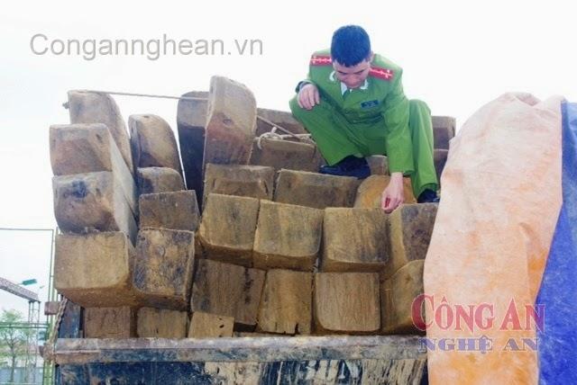 Lực lượng chức năng kiểm tra số gỗ lậu