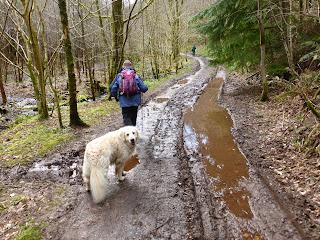 A muddy path through the wood