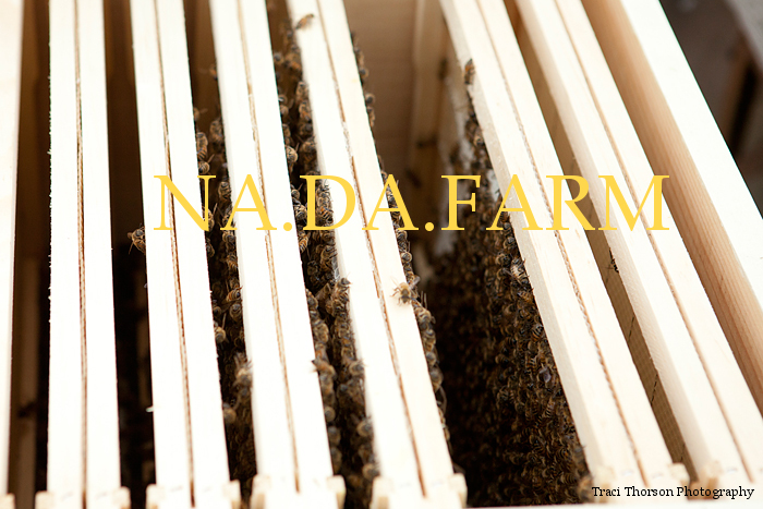 NA.DA.FARM Pure Prairie Honey!