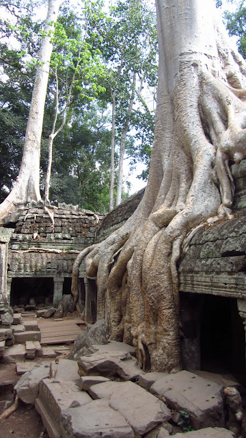 Huge trees growing out of the ruins of Ta Prohm.