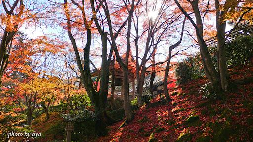 紅葉と鐘楼