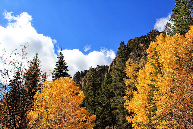 The leaves in the high country are changing and certainly give meaning to the moniker 'Colorful Colorado.' (ThorntonWeather.com)