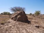Termite mound at Awash NP