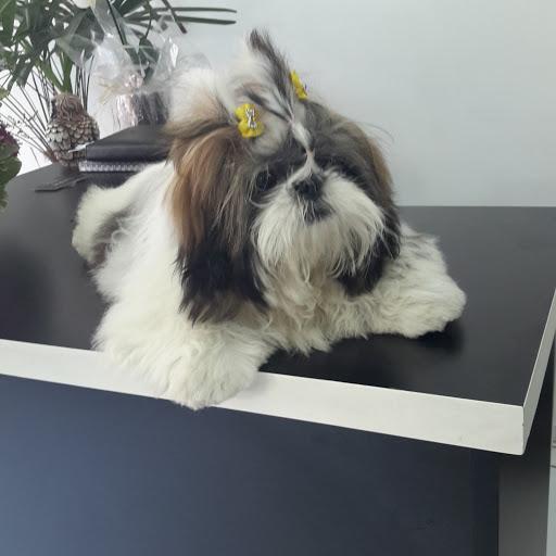 Bichinho Chique Pet Shop, R. Riachuelo, 878 - Centro Histórico, Porto Alegre - RS, 90010-272, Brasil, Loja_de_animais, estado Rio Grande do Sul