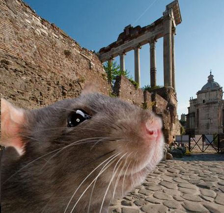 Ancient Roman sites face rat emergency