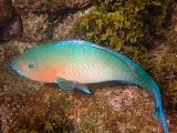 Plenty to See Underwater - Punta Egas Snorkeling