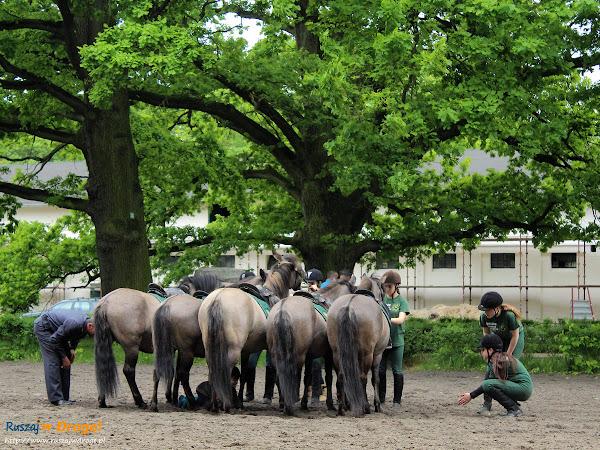 Pokazy konnej akrobatyki w Sierakowie