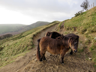 Ponies Below Back Tor