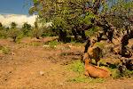 Robiłem zdjęcia krowom i ciekawym drzewom. Dopiero w domu zorientowałem się, że w tle znajduje się miejscowy cmentarzyk.