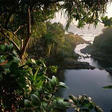 Foto-Foto Hutan Tropis Lebat dan Indah Seen On www.coolpicturegallery.us