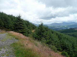 Emerging out of the forest - Keswick in the distance