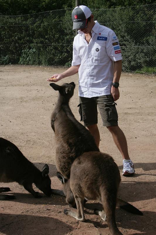 Камуи Кобаяши кормит кенгуру в мельбурнском зоопарке перед Гран-при Австралии 2012