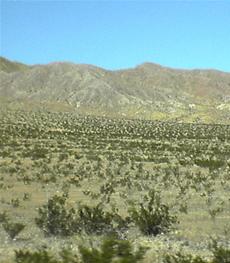 Central Grasslands
