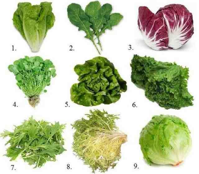 Разновидности листьев салата с