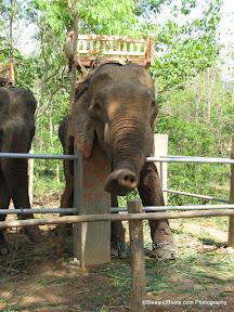 Elephant Waving Hi
