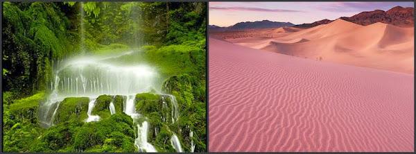 Image of Rain-forest versus Deserts