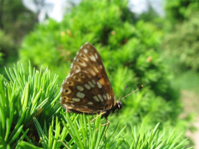бабочка краснокутский дендропарк