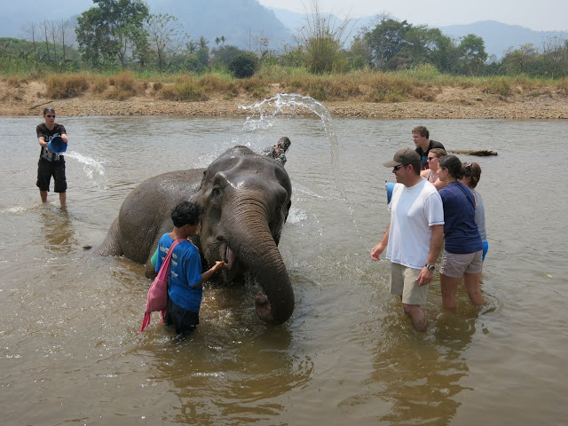 Giving one of the elephants its daily bath.