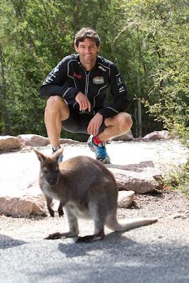 Марк Уэббер и кенгуру в парке Фрейсине в Тасмании 6 декабря 2011